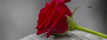 grief-title-image_tcm7-160799